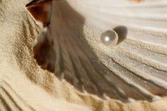 Perla en la concha marina Imagen de archivo