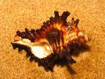 Perla en shell Fotos de archivo