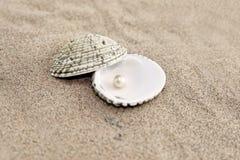 Perla en shell Imágenes de archivo libres de regalías