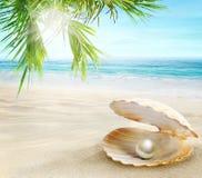 Perla en una c?scara abierta Playa tropical de Sandy imágenes de archivo libres de regalías