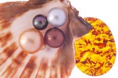 Perla hermosa en la cáscara con el ámbar Foto de archivo libre de regalías