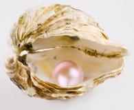 Perla rosada Imagenes de archivo