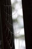 Perlas del web de araña Foto de archivo libre de regalías