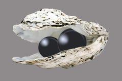 Perlas en shell Fotos de archivo libres de regalías