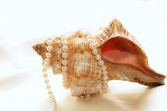Perlas envueltas alrededor de shell Foto de archivo