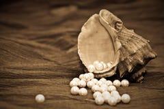 Perlas y ostra Fotografía de archivo libre de regalías