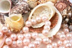 Perlas y shelles Foto de archivo
