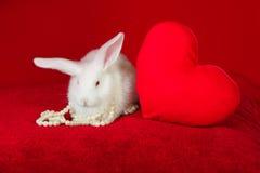 Perle bianche di bianco del cuore di rosso e del coniglio Immagine Stock Libera da Diritti