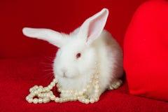 Perle bianche di bianco del cuore di rosso e del coniglio Fotografia Stock
