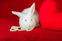 Perle bianche di bianco del cuore di rosso e del coniglio Fotografia Stock Libera da Diritti