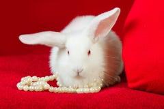 Perle bianche di bianco del cuore di rosso e del coniglio Fotografie Stock