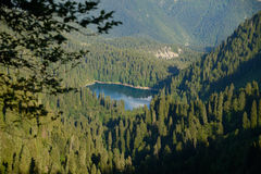 Perle bleue de la forêt Photographie stock libre de droits