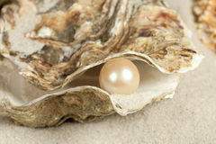 Perle dans l'huître Photographie stock