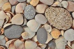 perle de beaux seashells images libres de droits