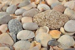 perle de beaux seashells photos stock