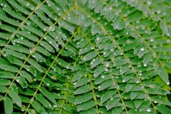 Perle delle gocce di pioggia Immagini Stock