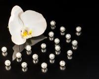 Perle e fondo del fiore Fotografia Stock Libera da Diritti