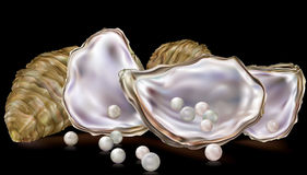 Perle nella conchiglia di ostrica Immagine Stock Libera da Diritti