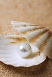 Perle sur le seashell photo libre de droits
