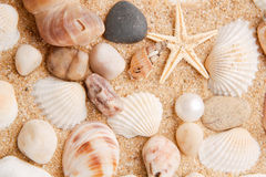 Perle sur le seashell Photos stock