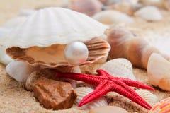 Perle sur le seashell Image libre de droits