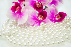 Perle und purpurrote Orchidee Lizenzfreies Stockfoto