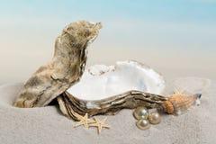 Perlen in einer Auster stockbilder
