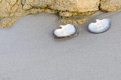 Perles blanches Photos libres de droits
