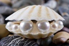 Perles dans l'interpréteur de commandes interactif image stock