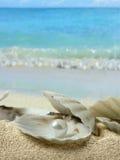 Perles dans le seashell images libres de droits
