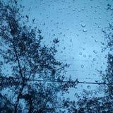 Perles de pluie sous des arbres Photo libre de droits