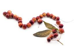 Perles faites de pommes Photographie stock libre de droits