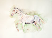 Perlino akhal-teke horse watercolor painting Royalty Free Stock Photography