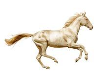 Perlino Akhal-teke końscy bieg uwalniają odosobnionego na bielu Zdjęcie Stock