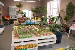 Perm Rosja, Marzec, - 04 2016: Dekoracyjni piękni kwiaty w sh Zdjęcia Stock