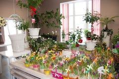 Perm Rosja, Marzec, - 04 2016: Dekoracyjni piękni kwiaty w sh Obrazy Stock