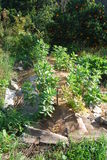 Permaculture trädgård Arkivfoto