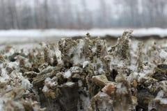 permafrost Imagens de Stock Royalty Free