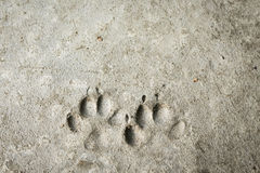 Permanent dog imprint Stock Photos