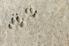 Permanent footprints Stock Images