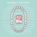 Permanent tooth chart record Royalty Free Stock Images