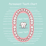 Permanent tooth chart record Royalty Free Stock Photos