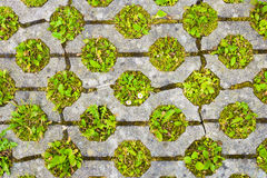 Permeable pavement with grass. Eco friendly parking Royalty Free Stock Photo