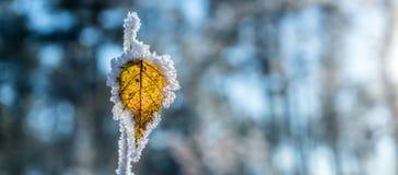 Permesso congelato fotografie stock
