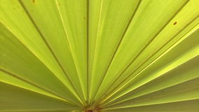 Permesso della palma Fotografia Stock