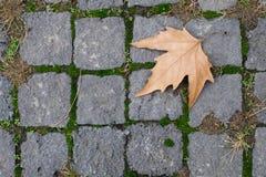 Permesso di autunno Immagini Stock Libere da Diritti