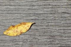 Permesso di autunno Fotografie Stock