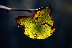 Permesso di autunno fotografie stock libere da diritti