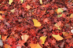 Permesso di autunno Fotografia Stock Libera da Diritti
