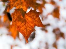 Permesso di autunno Immagini Stock